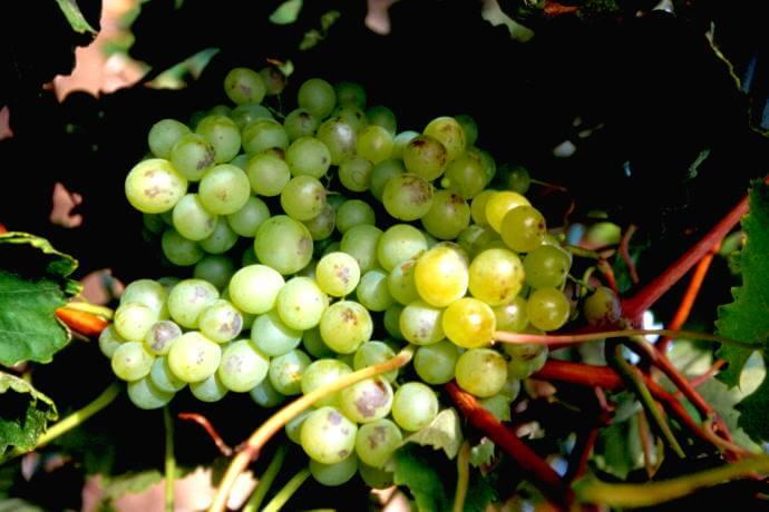 Wine Tour Pico Açores