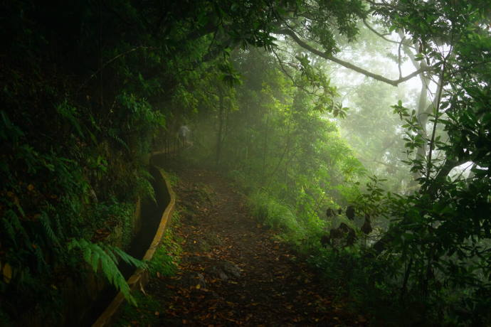 Madeira Island Levadas