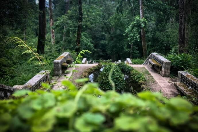 Buçaco Gardens