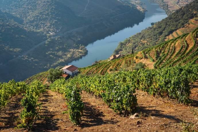 Douro Valley View